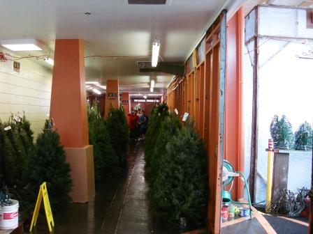 Xmas trees in shipping containers